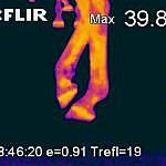 Thermografie-eines-Pferdes-3-9479fbcb